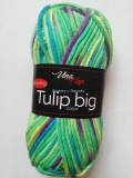 Tulip Big Color 5602